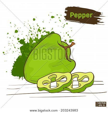 Green Pepper, Sketch Of Vegetable