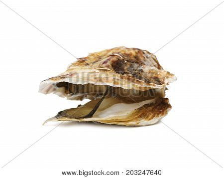 A close-up picture of a juicy oyster isolated on a white background. Fresh tropical sea mollusk full of nutrients. Opened seashell with the one-sidedly convex hull. Tasty delicacy. Copy space.