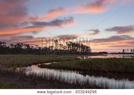 Coastal Wetlands of Virginia - Assateague Island