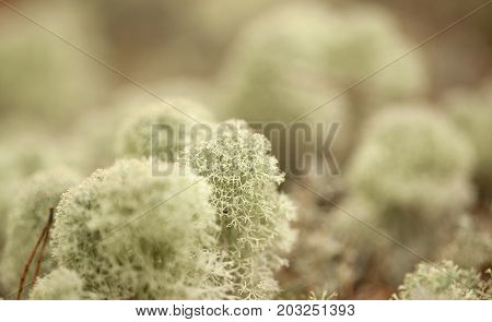 Natural Macro Background
