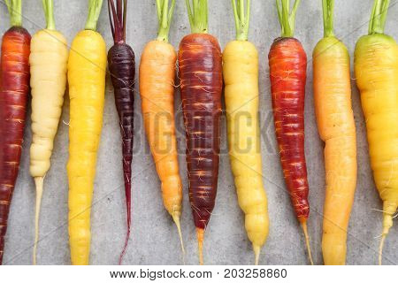 Colorful carrots on a gray ceramic background.