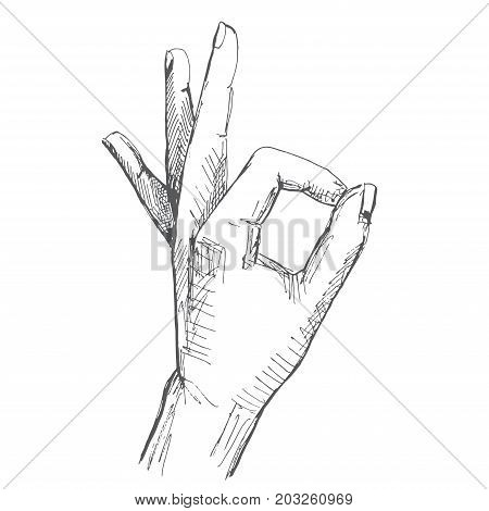Hand gesture okay. Illustration in sketch style. Hand drawn vector illustrations.