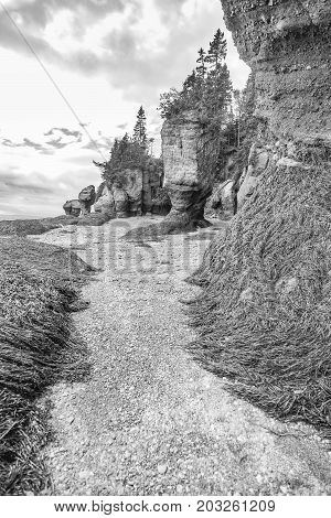 Pathway through mounds of kelp and tall formations on sea floor at low tide. Black and white art image in vertical position.