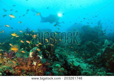 Scuba Diver over Coral Reef. Dampier Strait Raja Ampat Indonesia