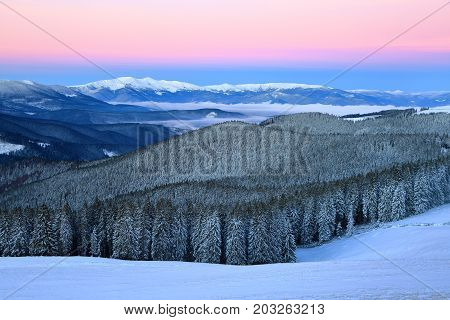 Winter forest of spruce trees poured with snow that like fur shelters the mountain hills covered with snow behind which the ridge of the black mountains with white caps of snow shrouded in fog waves.