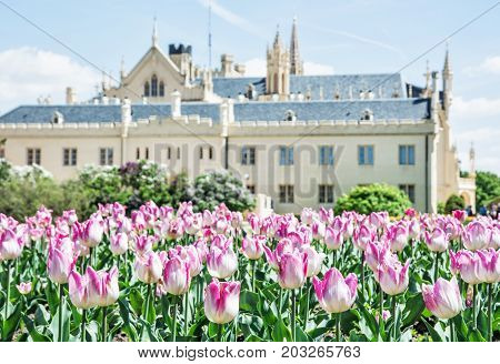 Majestic Lednice castle with flowering tulips southern Moravia Czech republic. Travel destination. Beautiful place.
