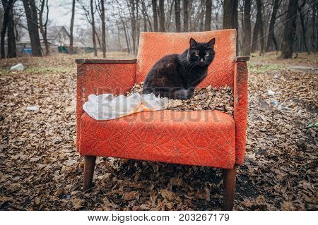 A gloomy black cat sitting on an old abandoned red armchair