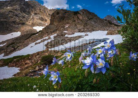Colorado Landscape Wild Flowers Blue Lake Mt Toll Trail