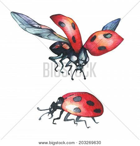 Ladybird set silhouette. Insect ladybug in flight, sitting. Watercolor hand drawn painting illustration isolated. White background. Drawing for postcard, greeting, invitation, book, fashion fabric.
