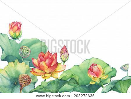 Border, frame of pink lotus flower with leaves, seed head, bud (water lily, Indian lotus, sacred lotus, Egyptian lotus). Watercolor hand drawn painting illustration isolated on white background.
