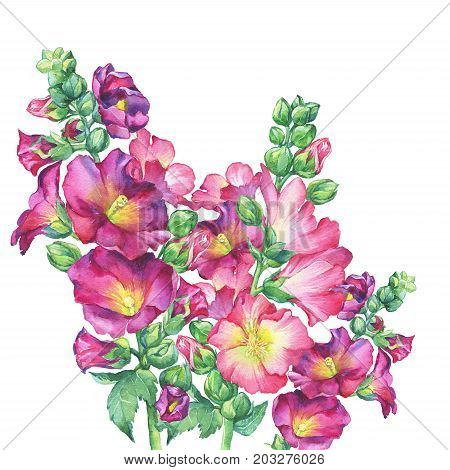 Bouquet of Mallow pink flower (Alcea rosea, malva, hollyhock, Althaea rugosa). Watercolor hand drawn painting floral illustration isolated on white background.