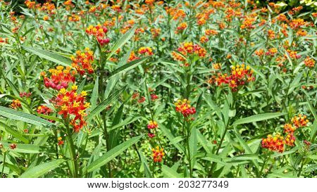 Orange Flowers in garden with soft focus background