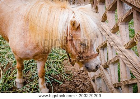 Pony by the fence at petting zoo safari lonely and sad look.