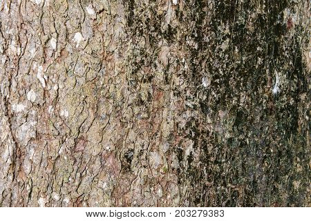 Tree bark skin exterior background trunk organic weathered grunge peel rustic detailed