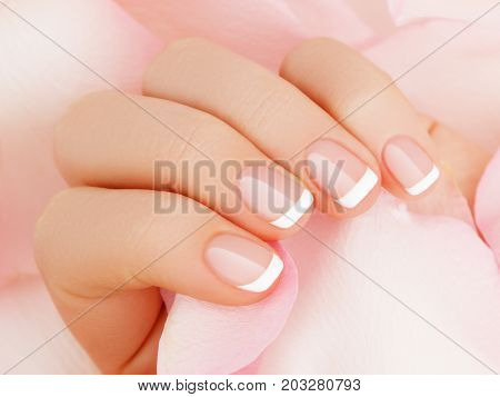 Soft Selective Focus. Beauty Nail Care. Delicate Hands With French Manicure Holding A Pink Petals Cl
