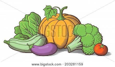 Still-life with vegetables. Pumpkin zucchini eggplant broccoli lettuce and tomato. Stylized colored vector illustration