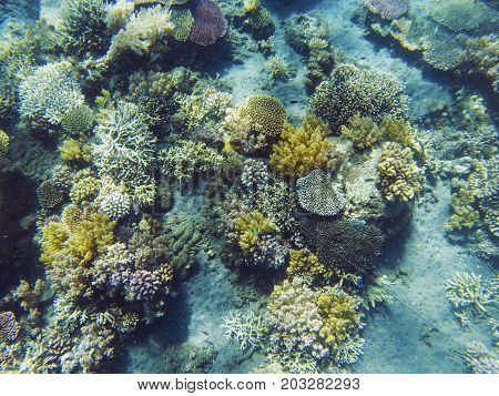 Tropical seashore underwater landscape. Coral reef and fish top view. Coral reef underwater photo. Snorkeling or diving undersea banner template. Seaside summer vacation activity. Aquarium background