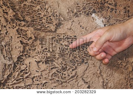 Hand pointing at a termite nest on wooden wall of a room / Termite problem in house concept