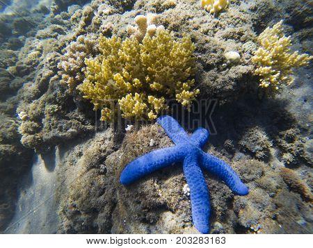 Tropical seashore underwater landscape. Coral and blue starfish closeup. Coral reef underwater photo. Snorkeling or diving undersea banner template. Seaside summer travel activity. Aquarium background