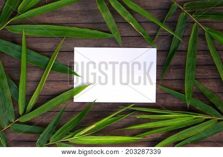 Bamboo leaf frame on rustic wooden background. Blank paper in bamboo leaf wreath. Chinese bamboo flat lay. Spa or beauty banner. Exotic island travel postcard mockup. Tropical vacation card template