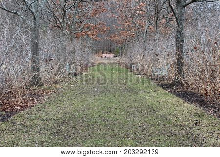 Avenue of oaks in winter path formal background, horizontal aspect