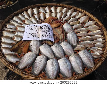 the fish and Dried fish,thai local food