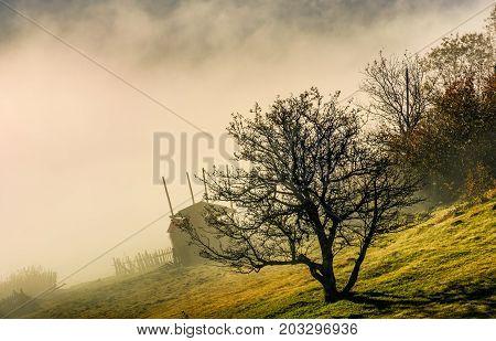 Naked Tree On Hillside In Fog At Sunrise