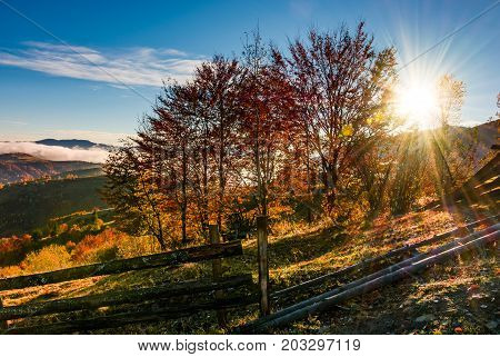 Red Forest On Hillside Behind The Fence At Sunrise
