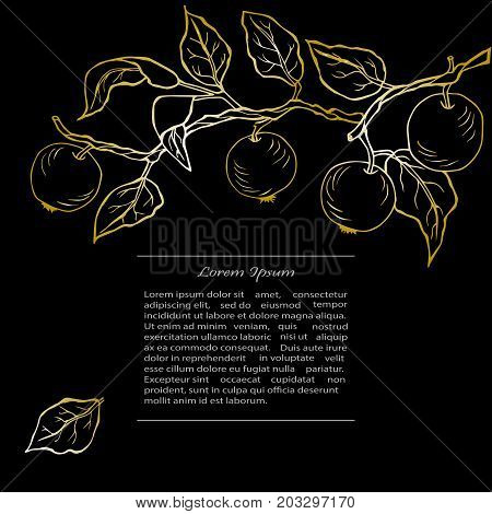Template with golden apples on black background. Text copy frame template. It can be used for flyers, cover, invitation, birthday, greetings, Thanksgiving, Shana Tova card. Vector illustration.