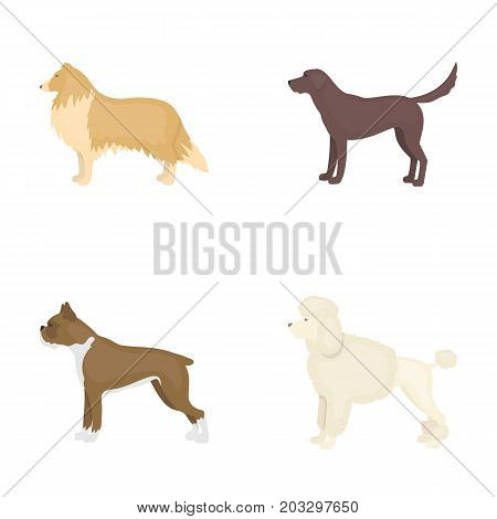 Collie, labrador, boxer, poodle. Dog breeds set collection icons in cartoon style vector symbol stock illustration .