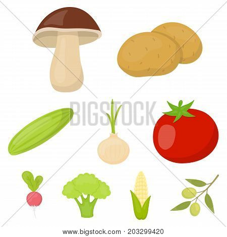 Vegetables set icons in cartoon style. Big collection of vegetables vector symbol stock