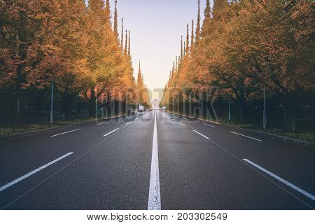 Beautiful road with trees on sideroad in autumn. Straight road with falls nature background shot at Icho Namiki Road Tokyo Japan.