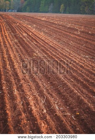 Rows and furrows in a freshly plowed potato field in rural Prince Edward Island, Canada.