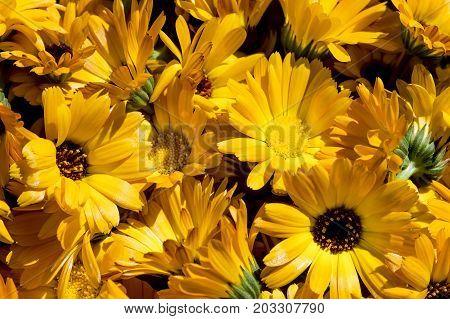 first spring flowers, snowdrops in garden, sunlight
