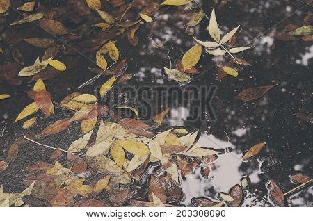 Background Texture of Yellow Soft Colored Leaves in Puddle Autumn Leaf Background. Faded Leaves in November.