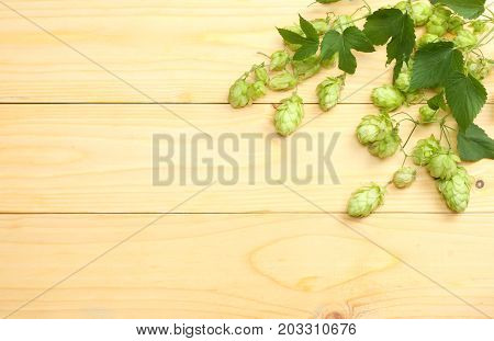Beer Brewing Ingredients Hop Cones On Light Wooden Table. Beer Brewery Concept. Beer Background. Top