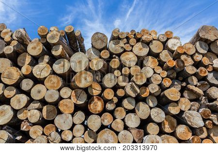 Stack of cut timber logs against clear blue sky. Closeup of wooden trunks.