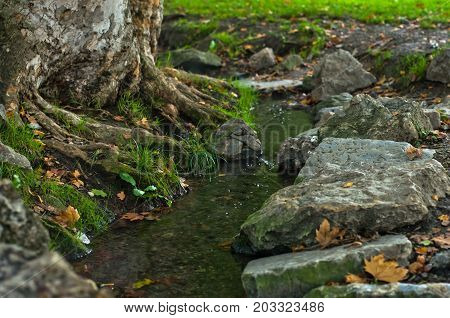 Water stream passing by the roots of a big old tree at dawn in Topcider park, Belgrade, Serbia