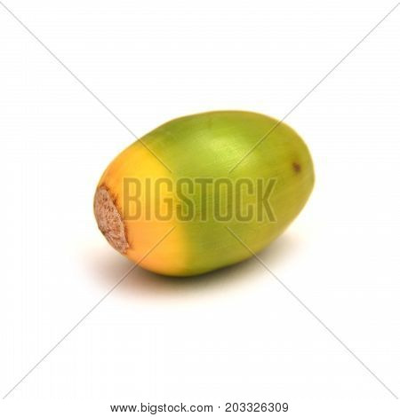 green acorn isolated on a white background