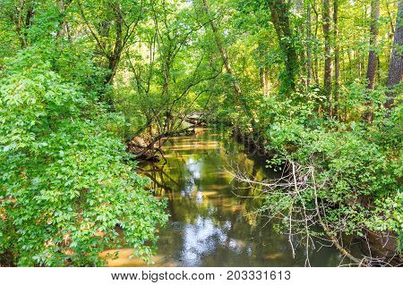 A Peaceful Stream in a Summer Forest