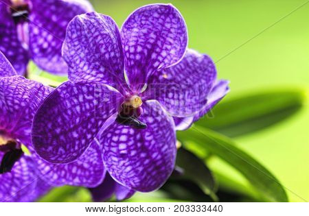purple orchid on green background with copy space
