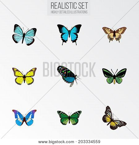 Realistic Archippus, Bluewing, Hairstreak And Other Vector Elements