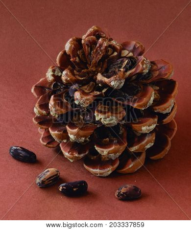 pine cones with pine nuts. Pineapple freshly fallen from the tree full of pine nuts.