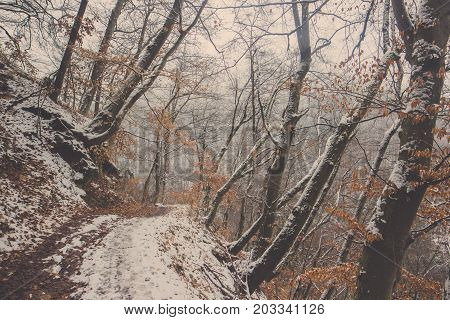 Curved walkway into the forest covered in snow with leaves of tree in Bled at Slovenia, Scenery of snow covered jungle trail at the foot of the hill with brown tree line in winter season
