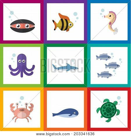 Flat Icon Marine Set Of Scallop, Cancer, Hippocampus And Other Vector Objects