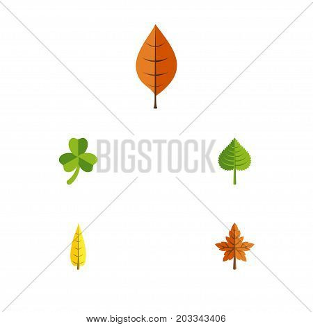 Flat Icon Leaf Set Of Hickory, Foliage, Alder And Other Vector Objects