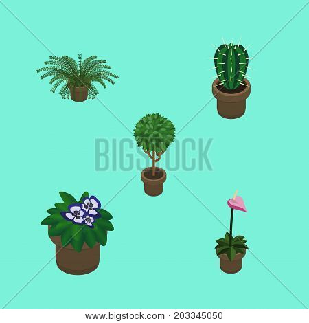 Isometric Plant Set Of Grower, Plant, Peyote And Other Vector Objects