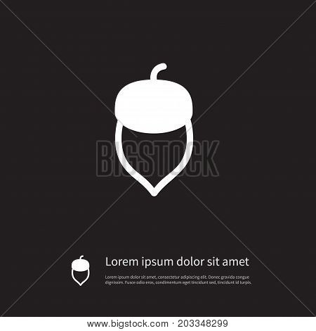 Hazel Vector Element Can Be Used For Nut, Nutwood, Hazel Design Concept.  Isolated Nutwood Icon.