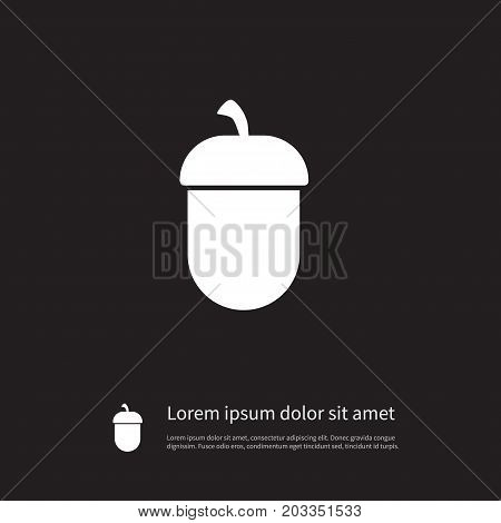 Oak  Vector Element Can Be Used For Nut, Oak, Hazelnut Design Concept.  Isolated Nut Icon.