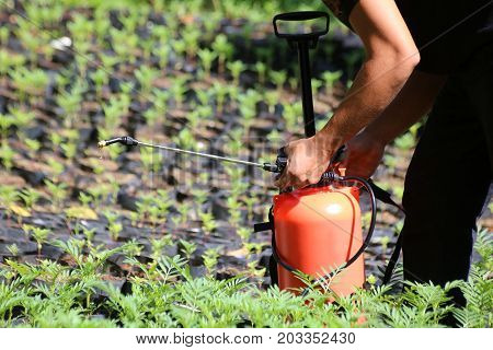 Workers are using a sprayer in the garden in Thailand.